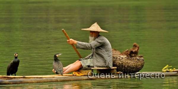 Рибалка з бакланов