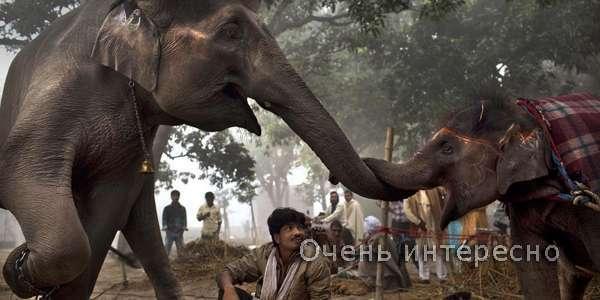 Тварини в культурі Індії